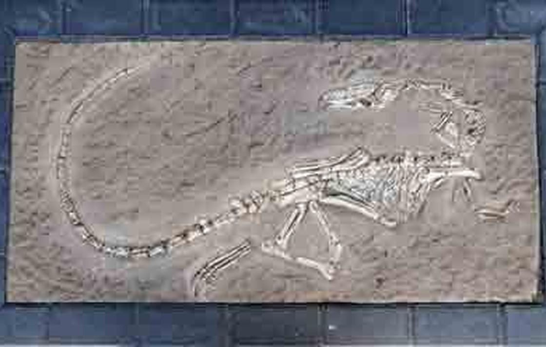 Replica Dinosaur Fossil