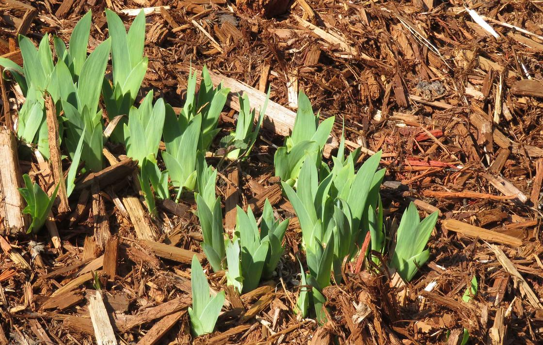 Now's the time to get out and spread a fresh layer of mulch in your garden.